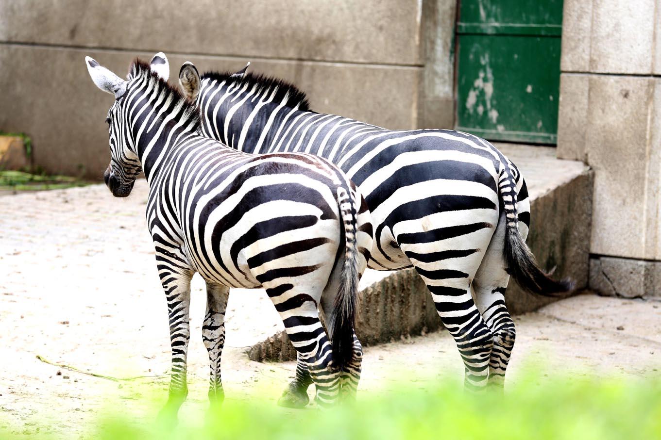nut90作品:动物园的闲暇时光