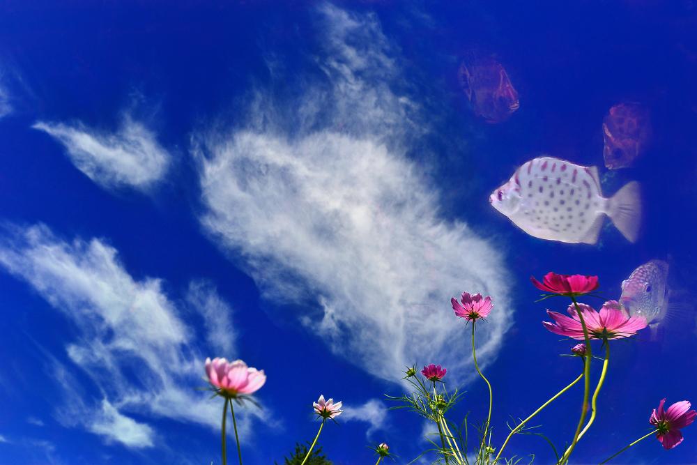 摄欲作品:同在蓝天下