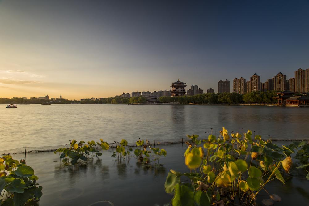 西安老李作品:湖边摇曳的荷花