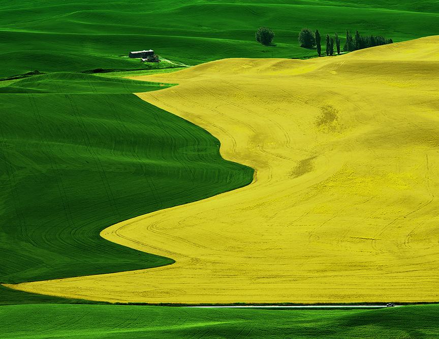 冬天的狼作品:黄和绿
