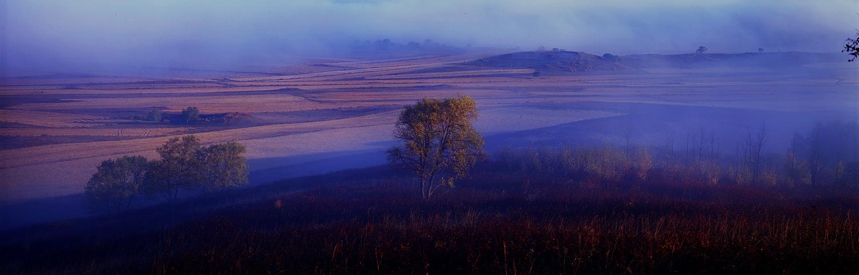 花果山作品:玉树秋雾