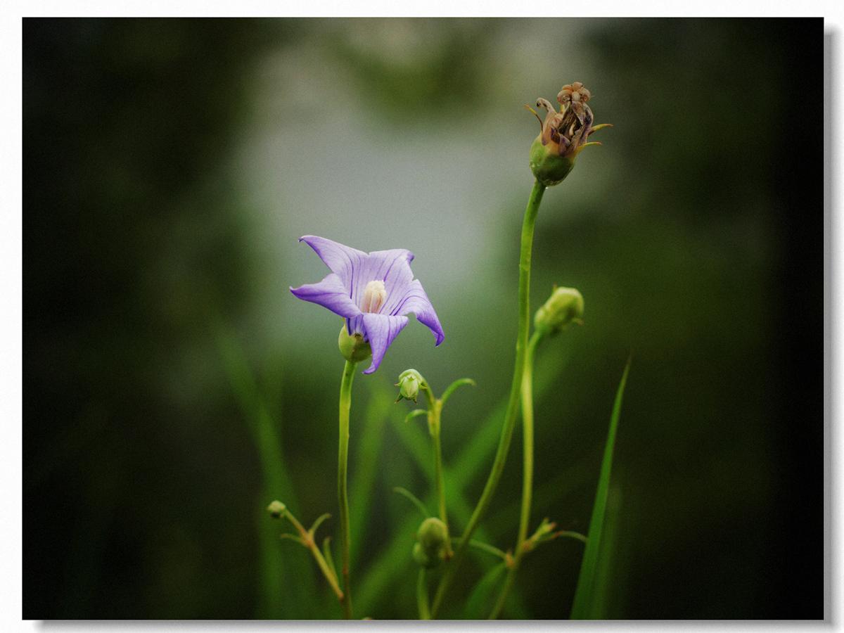 盛开的鲜花 枯萎的花蒂 花开四季,草木一生,人生何尝不是如此 -