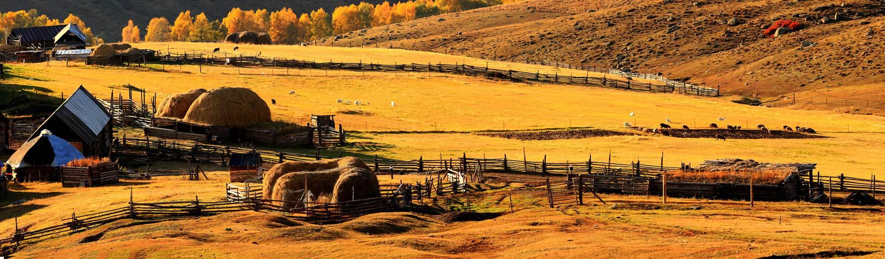 zxz0877作品:图瓦人的牧场
