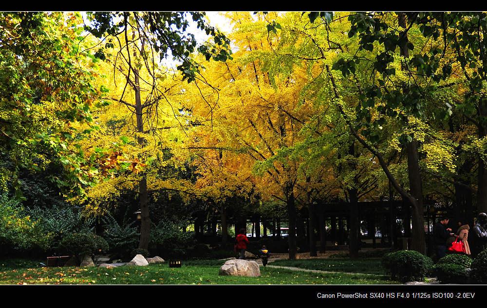 黄的银杏,火红的枫叶,秋天的叶子绚丽多彩
