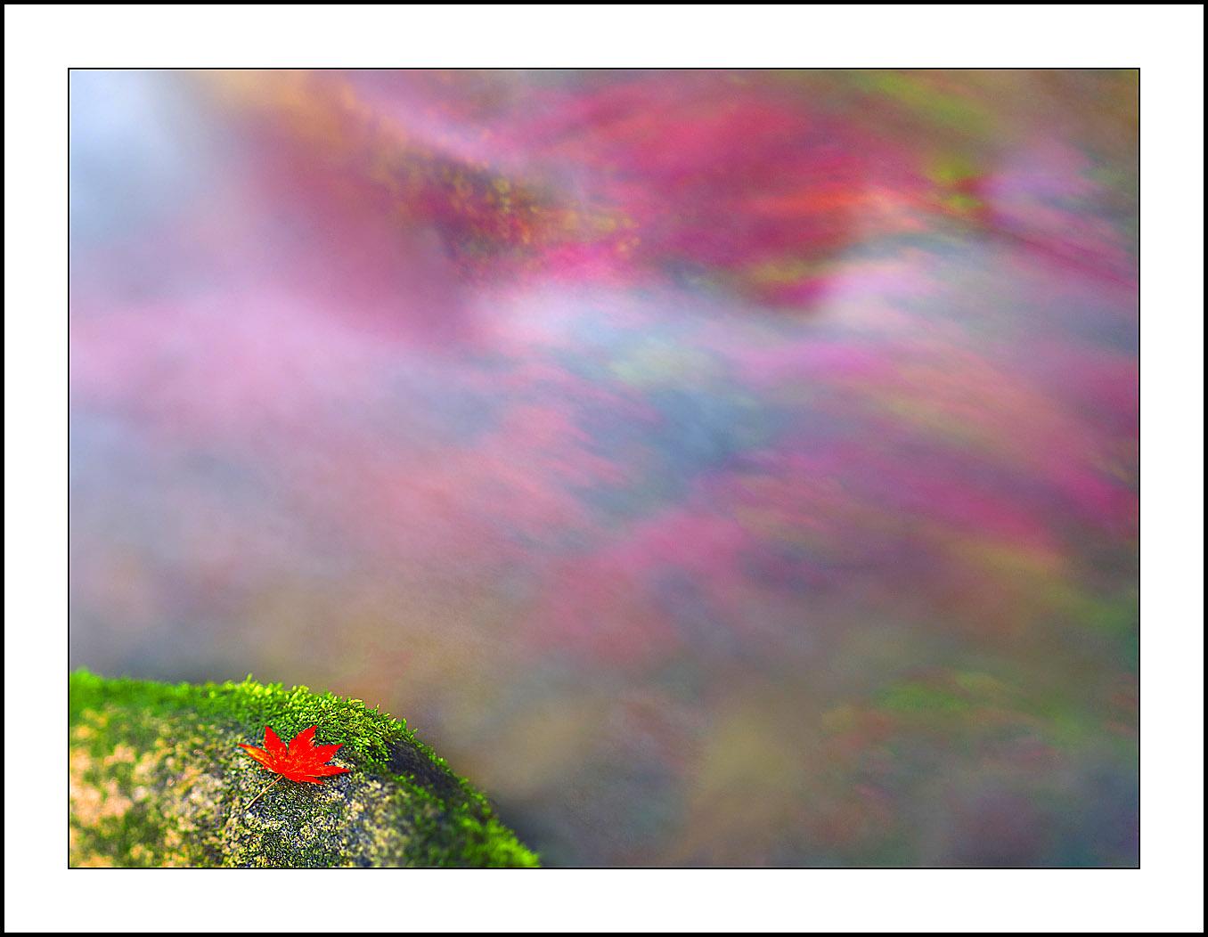 平安A作品:飘零的红叶(一)