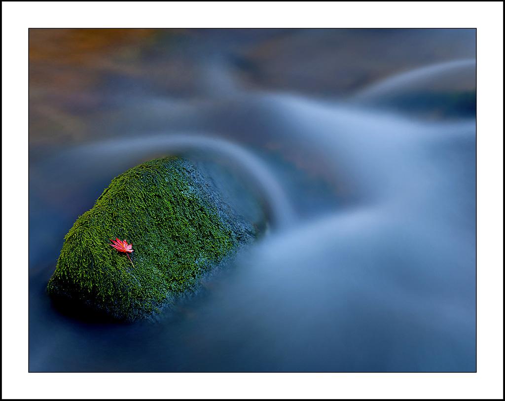 平安A作品:飘零的红叶(五)