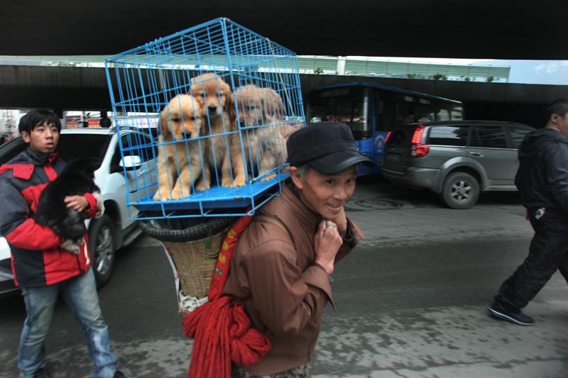 彭年作品:背可伶狗狗的农民工