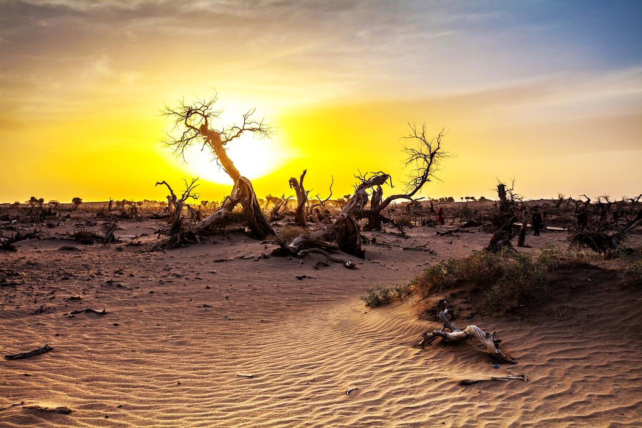 南极翁作品:荒漠、夕阳、枯树