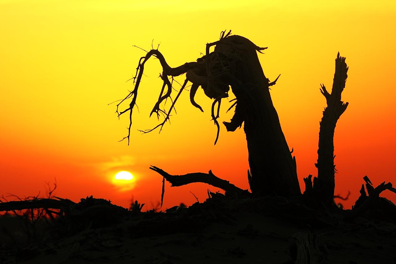 南极翁作品:夕阳、荒漠、枯树