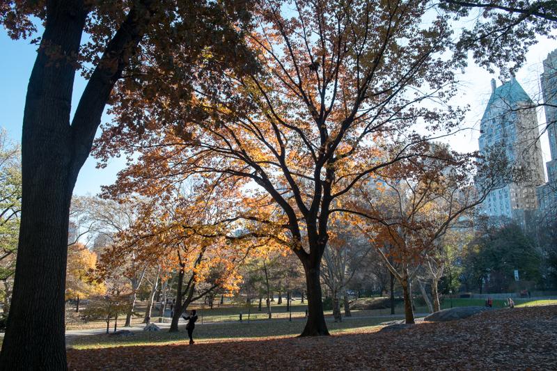 hunterpoint作品:中央公园秋色