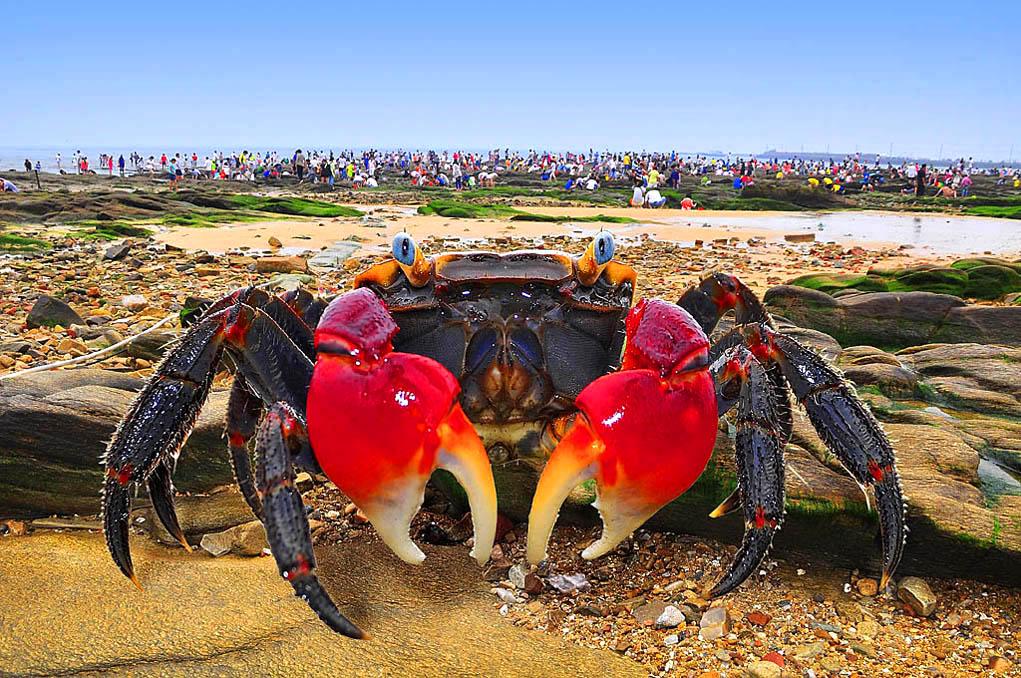 F80LY作品:唯我独尊-红海蟹