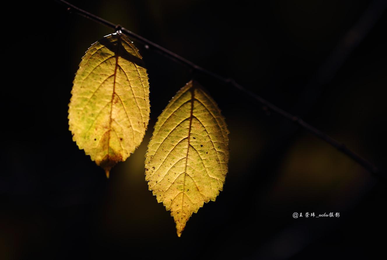 北京公园秋天的树叶