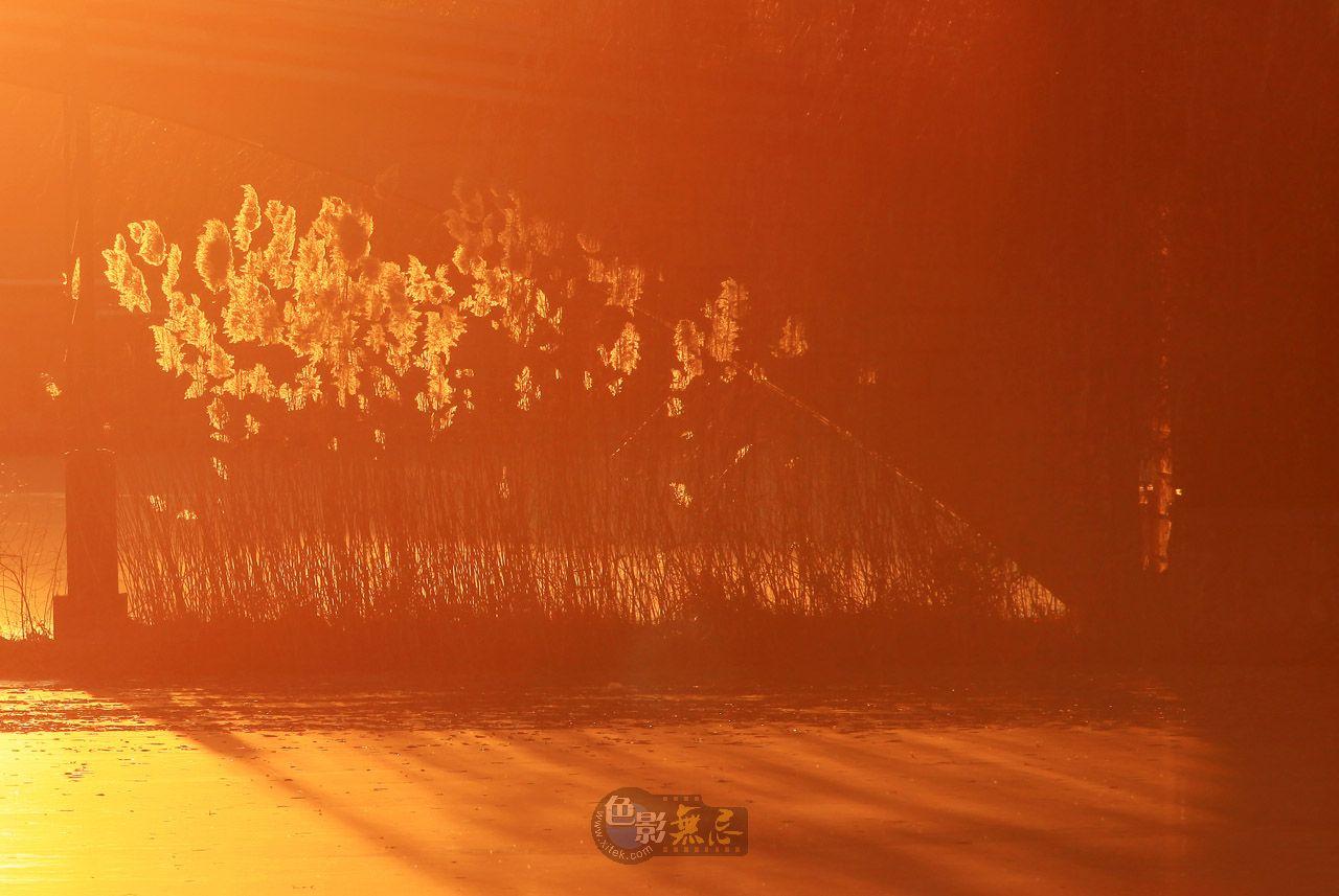 sunsaw作品:夕阳下的芦苇