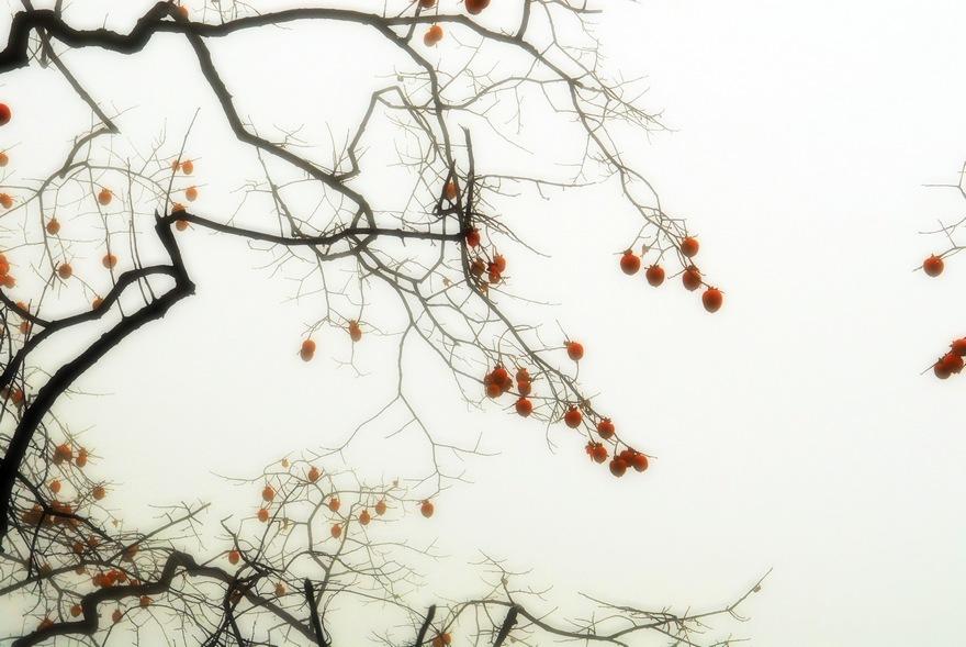 山东山作品:多柿之秋