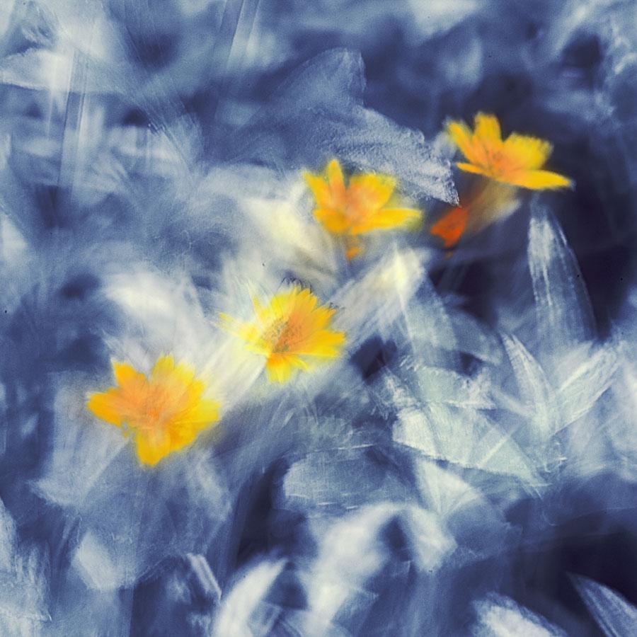 一色夫作品:四朵小金花