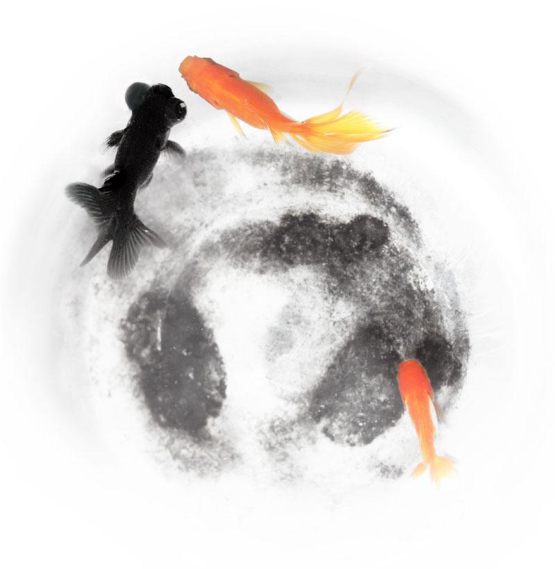 一色夫作品:再拍鱼