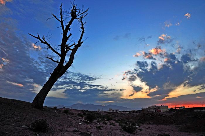 泼墨天堂作品:枯树的呼唤