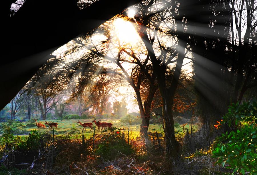 浊酒一壶作品:清晨林间的一群精灵