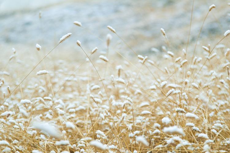 山地雪绒花作品:第一场雪