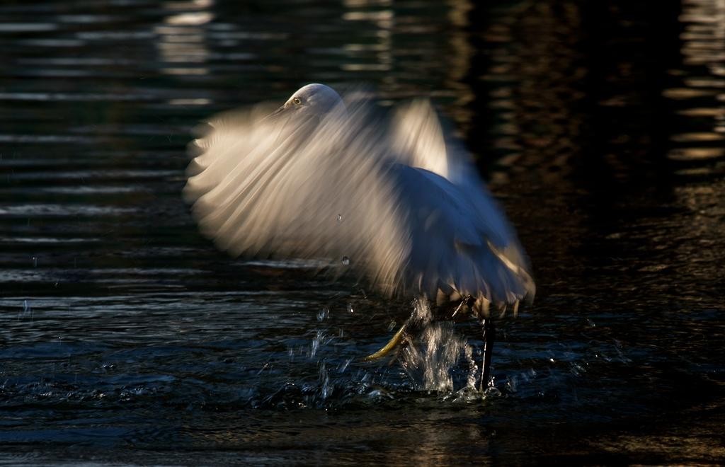 漆洁冰作品:动感鹭鸟
