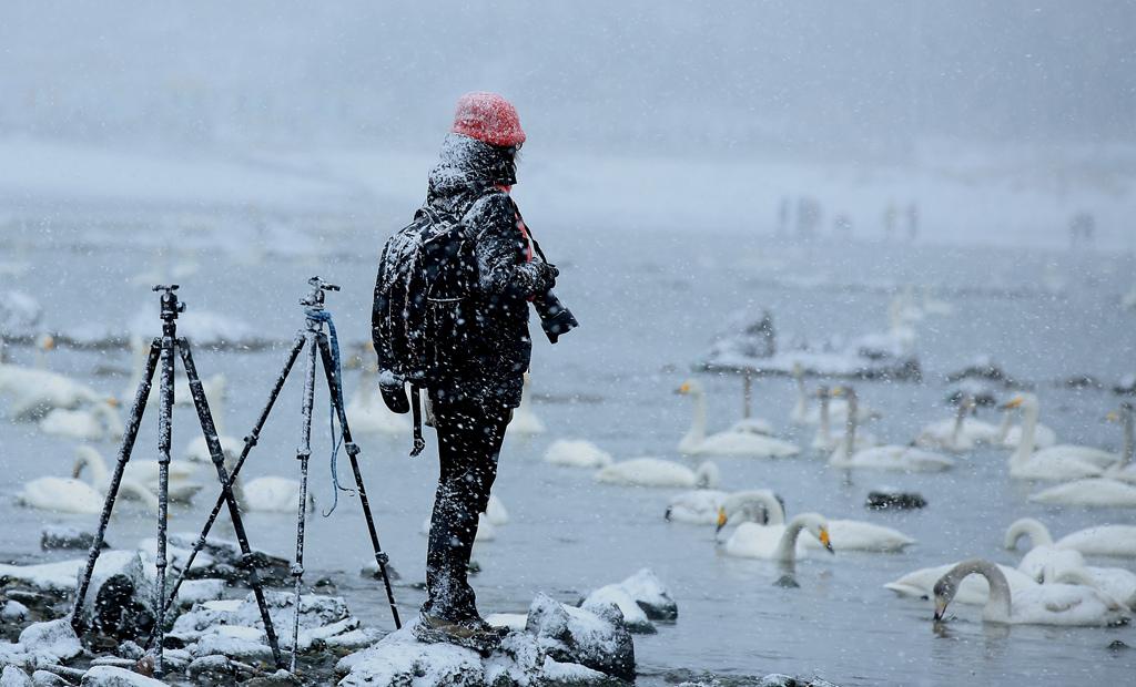 鲁北榕树作品:风雪摄影人