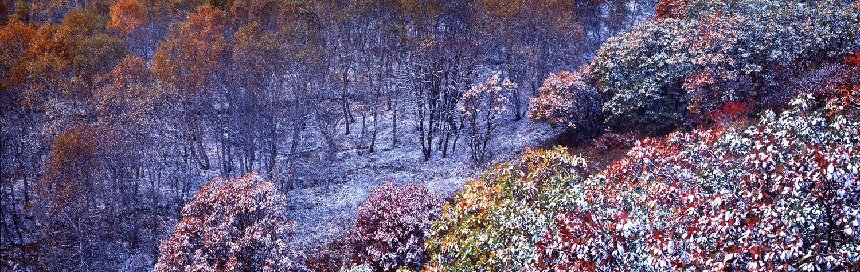 花果山作品:秋雪琼树