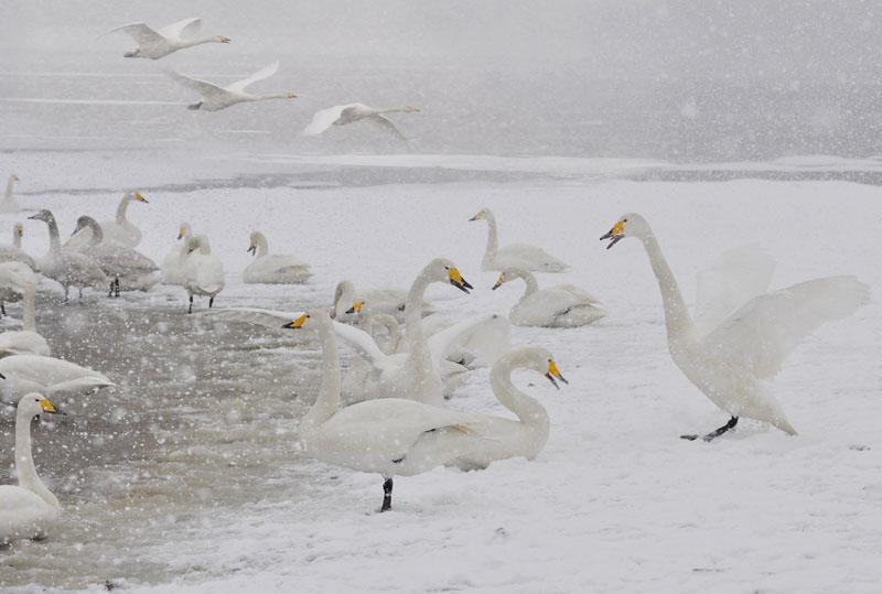 长甲归来作品:雪中欢歌