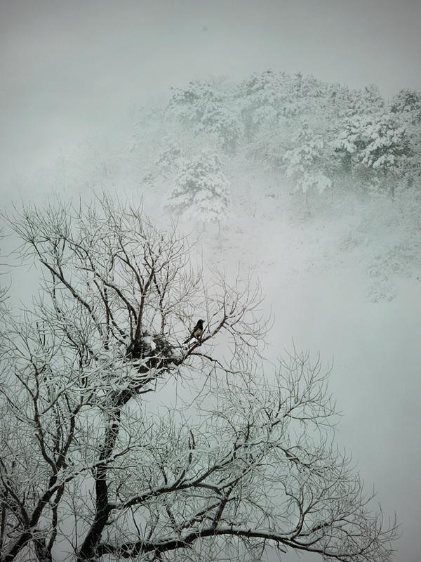 桥凹作品:千山暮雪