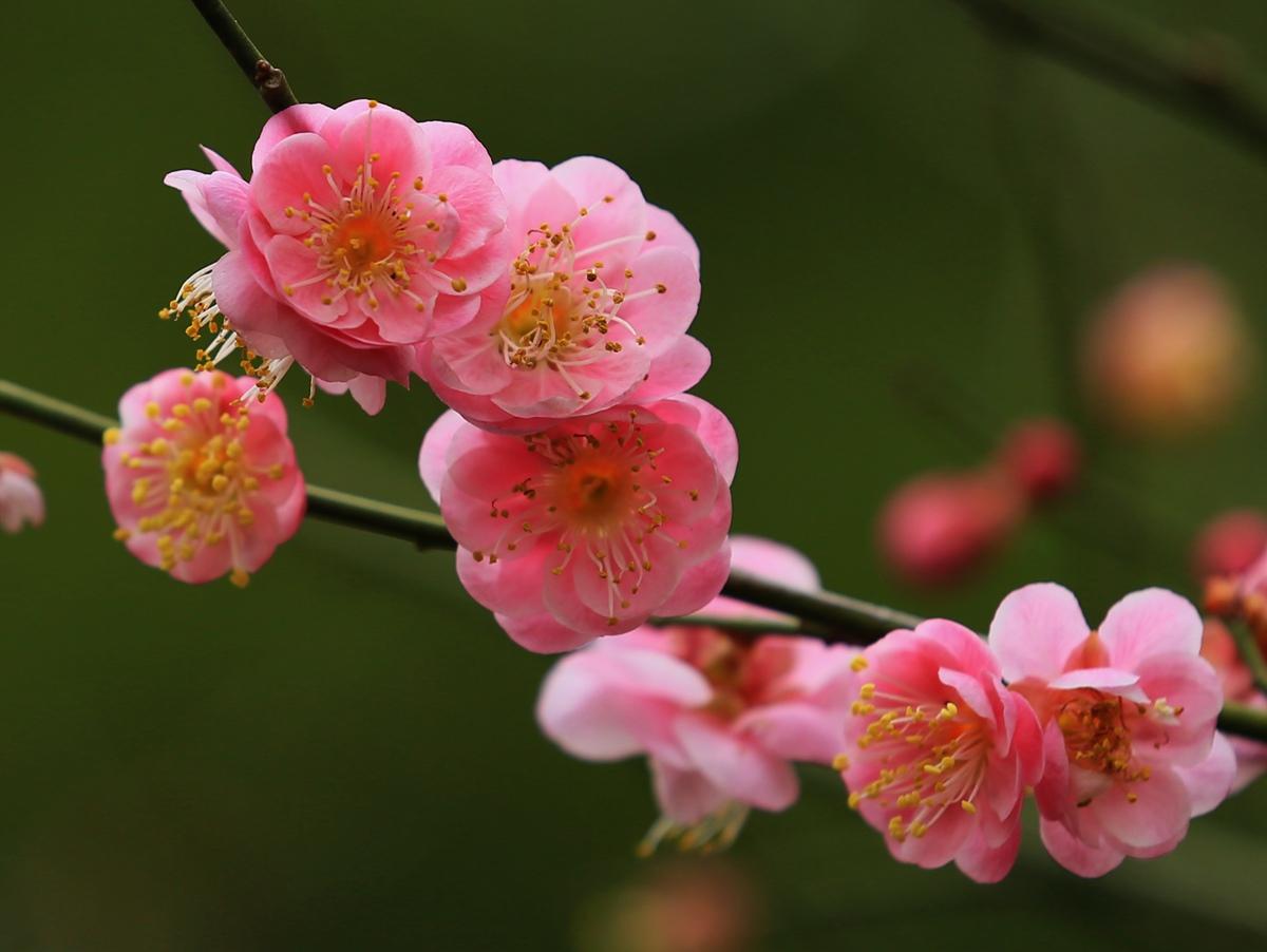 雾之松作品:红梅花儿开