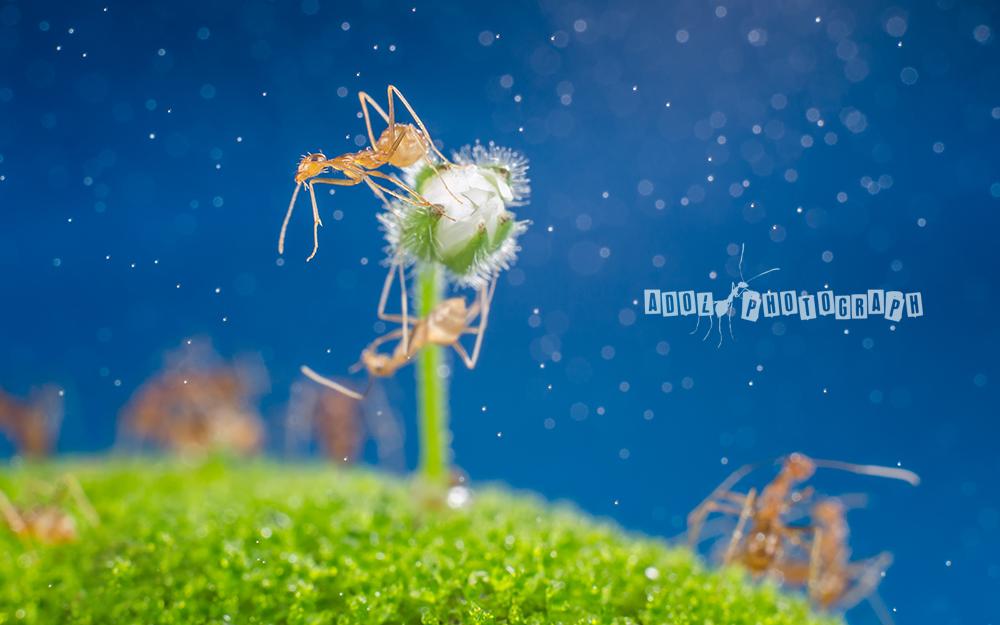 adol作品:蚂蚁的童话世界
