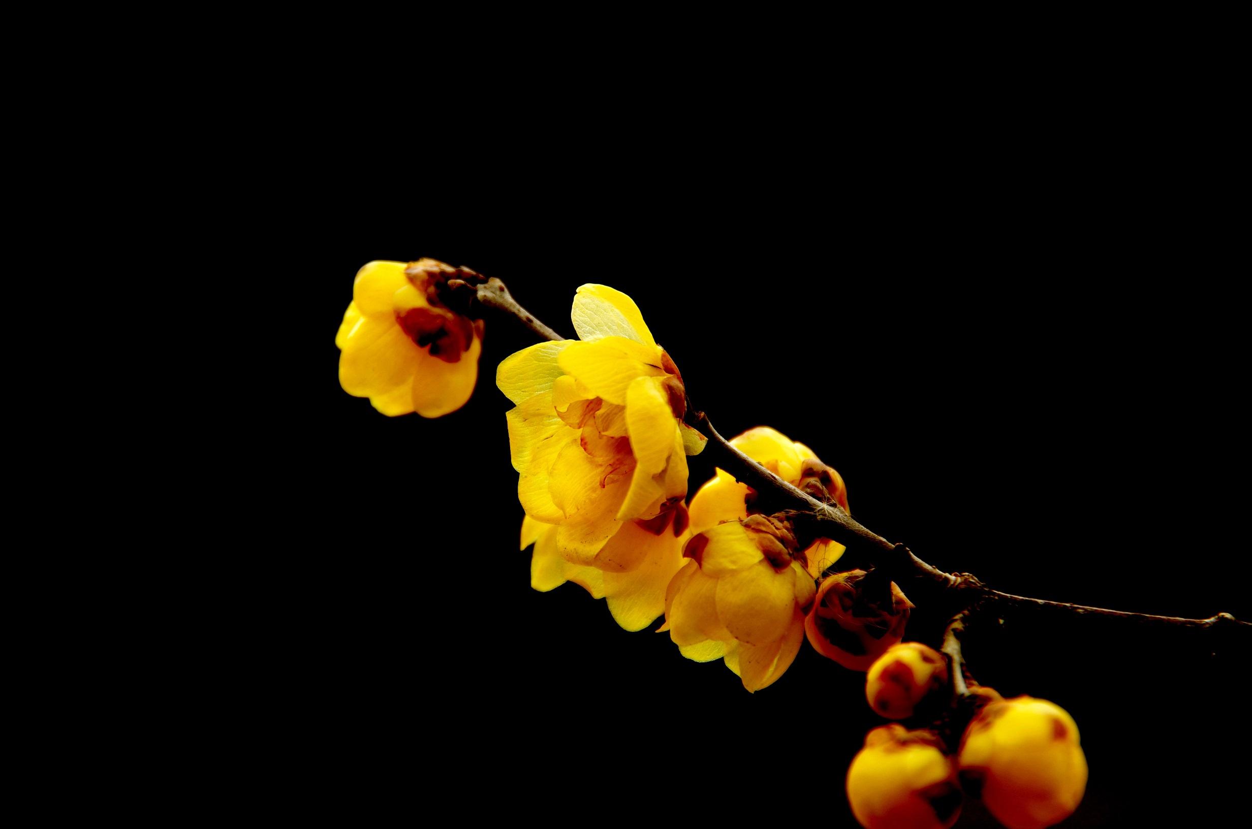 嵖岈石猴作品:暗香