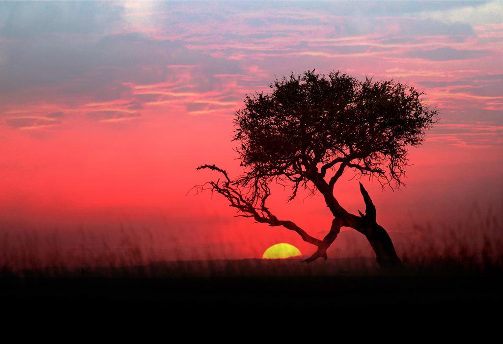 受益作品:东非草原日落