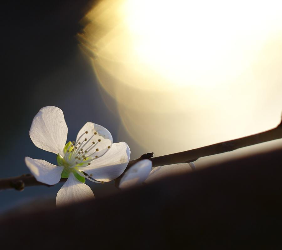 平野大荒作品:桃花