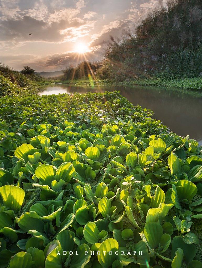 adol作品:小溪旁的那一片绿
