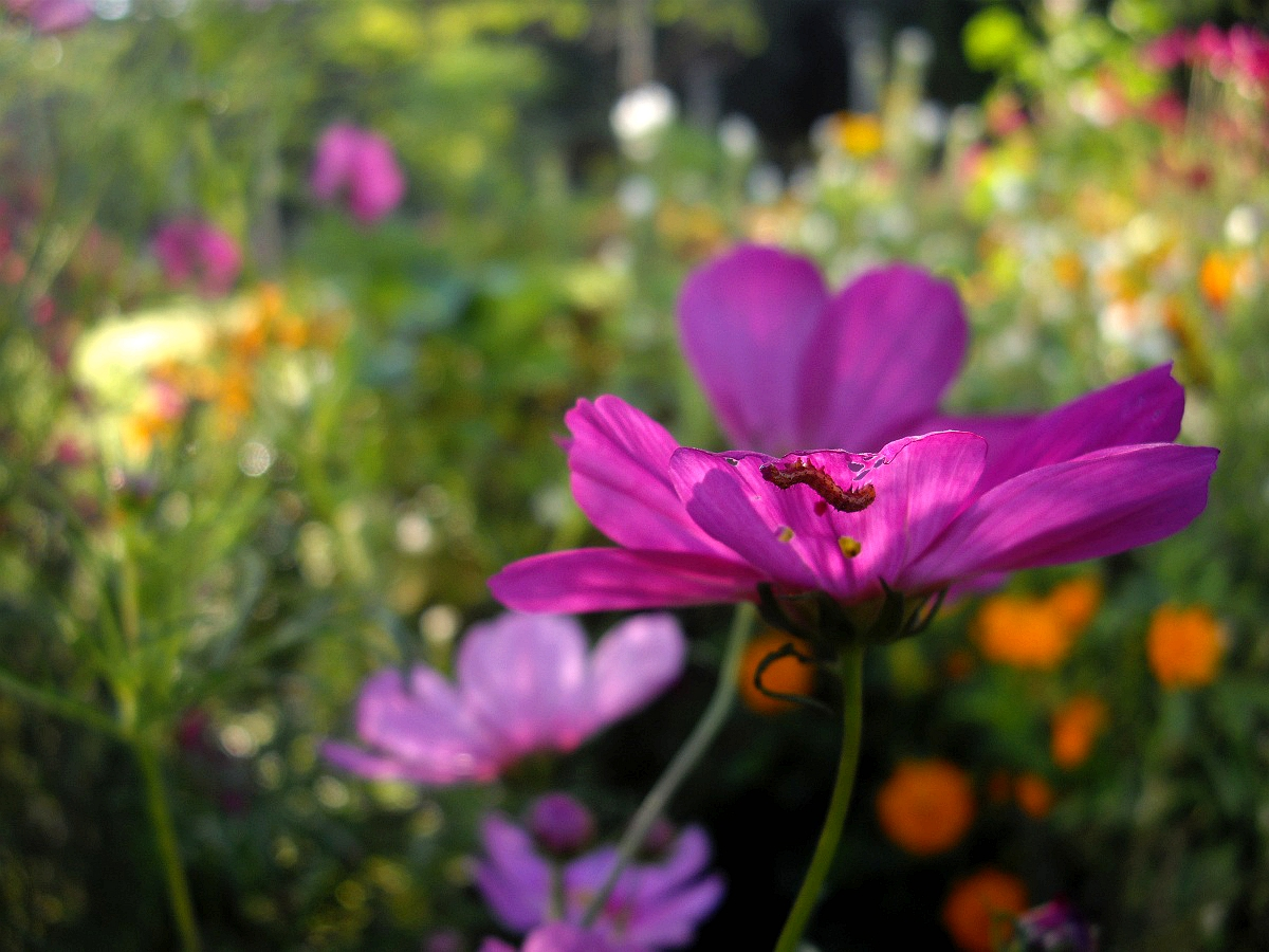 大卫DC作品:鲜花与害虫