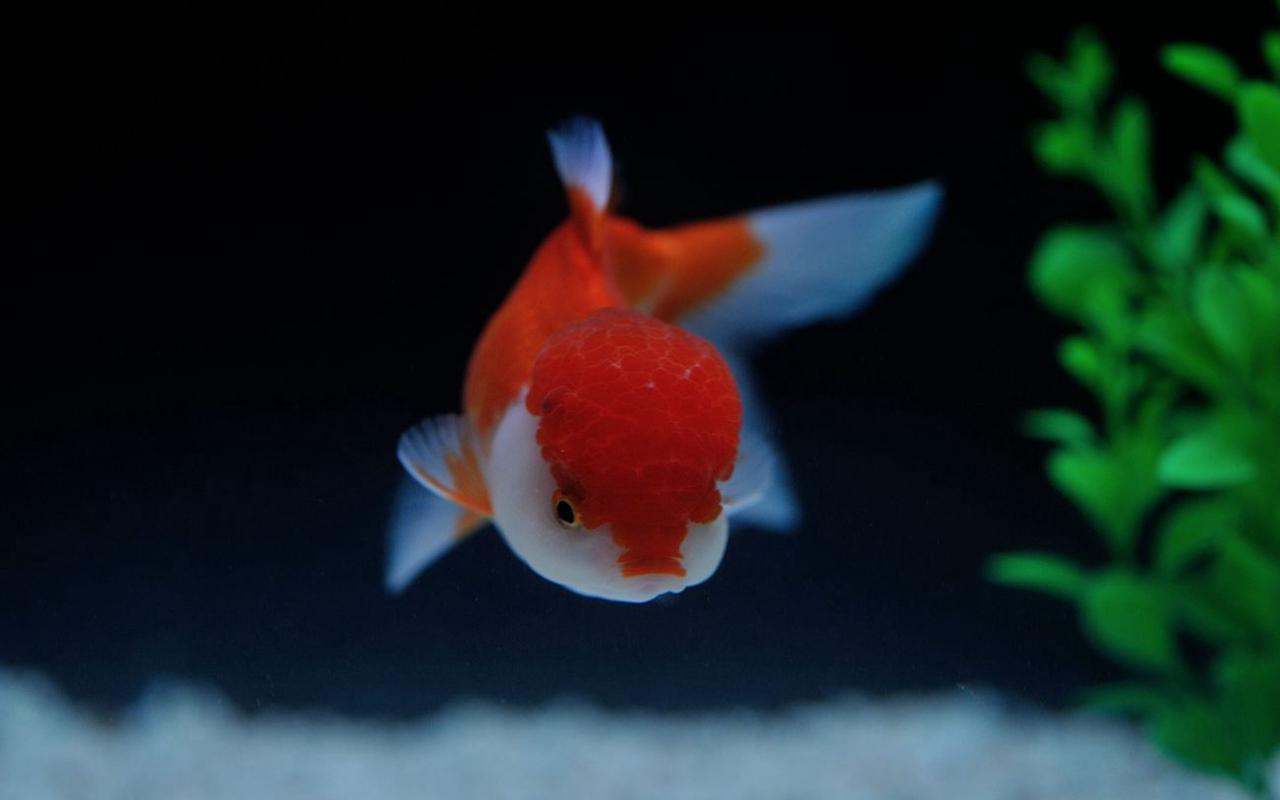 光影骑兵作品:我想似鱼儿游在你身旁