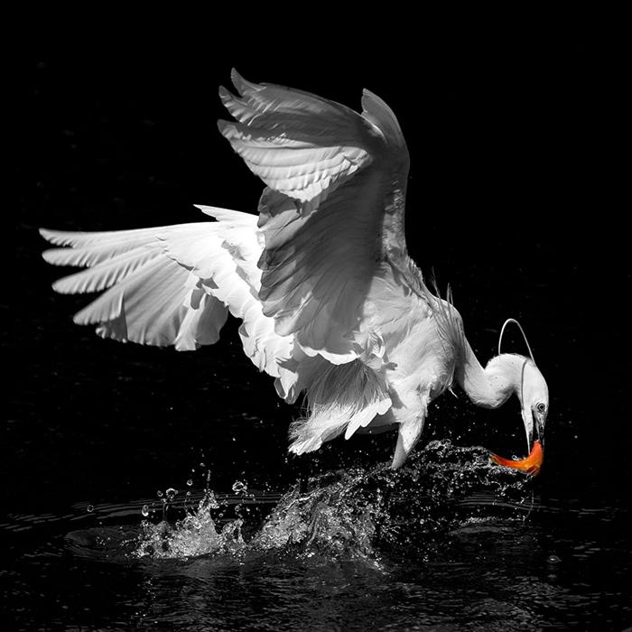 曹操作品:鹭鸟捕食
