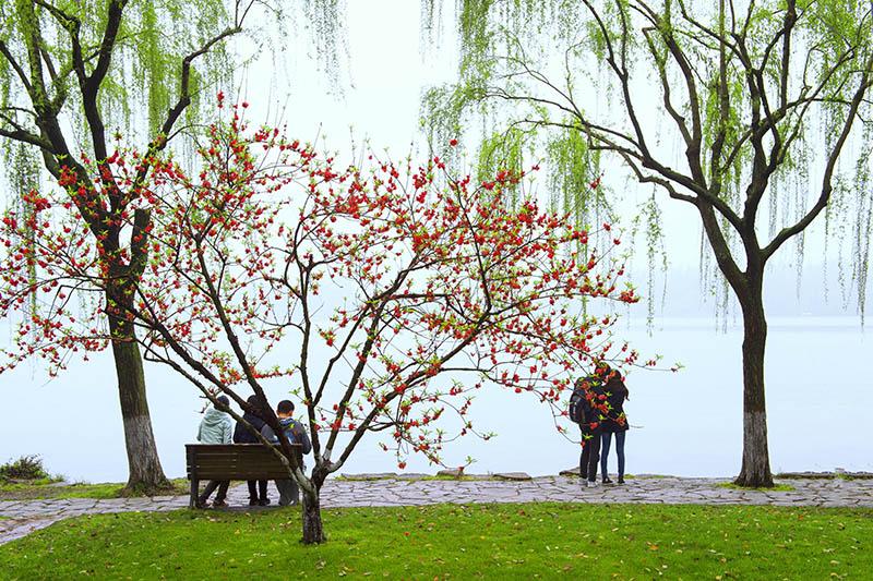 高林作品:西湖小景