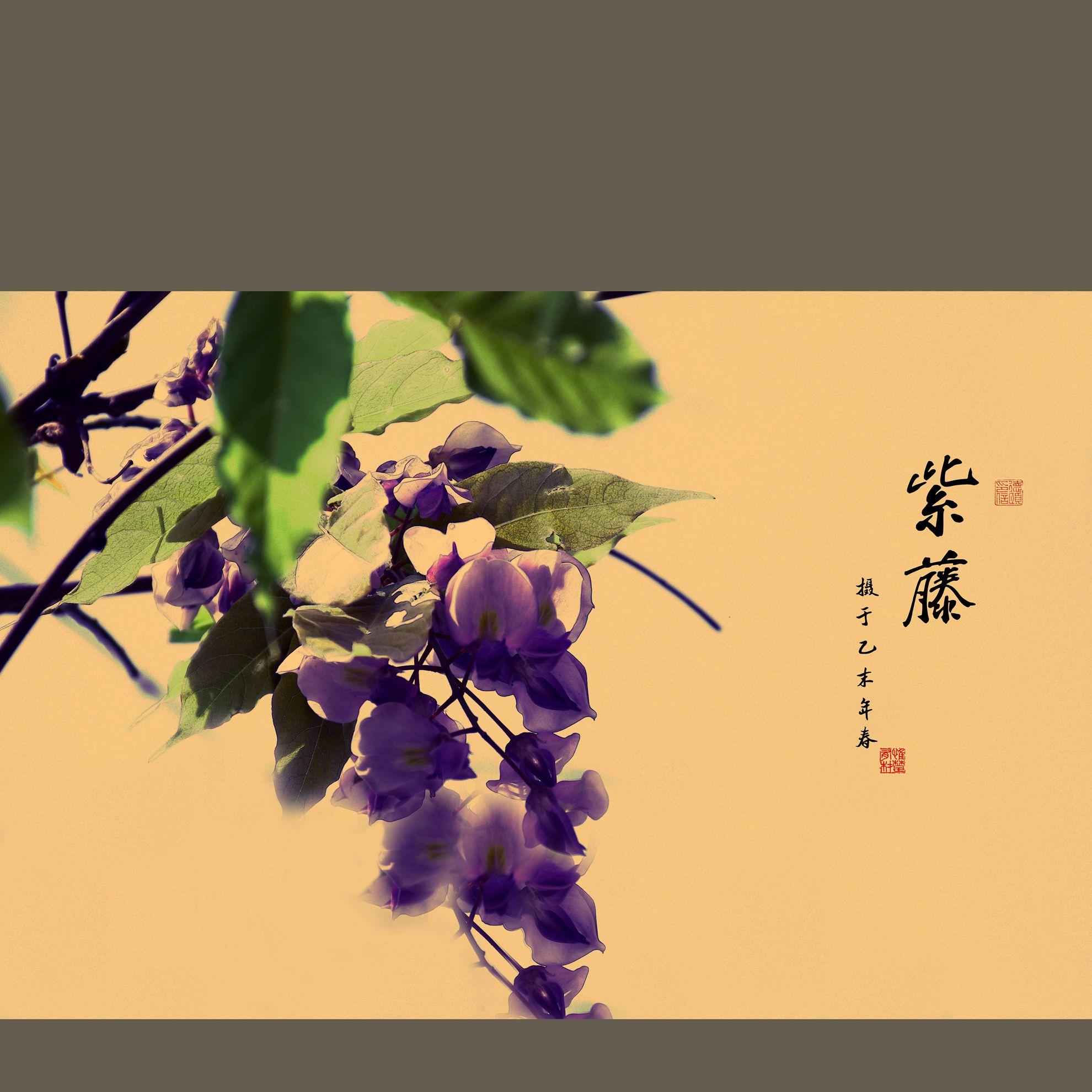 长江0081234作品:紫藤