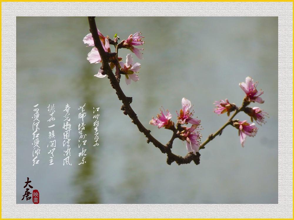 像那盛开在野地的鲜花歌谱