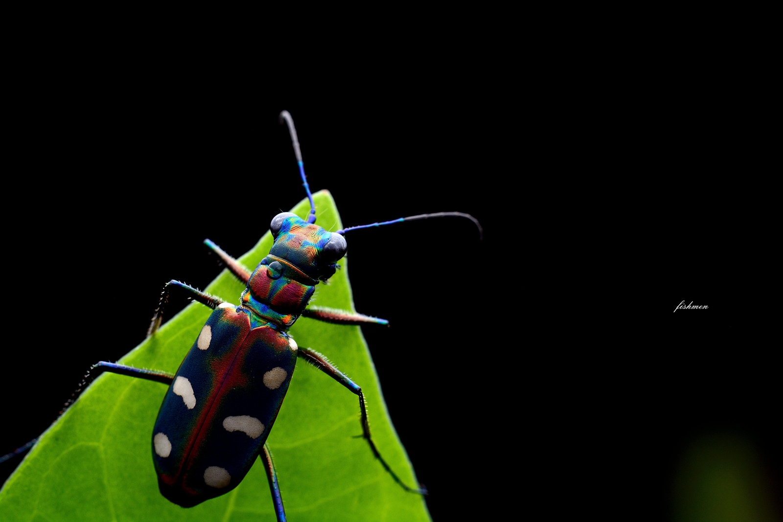 fishmen作品:微距的精彩世界