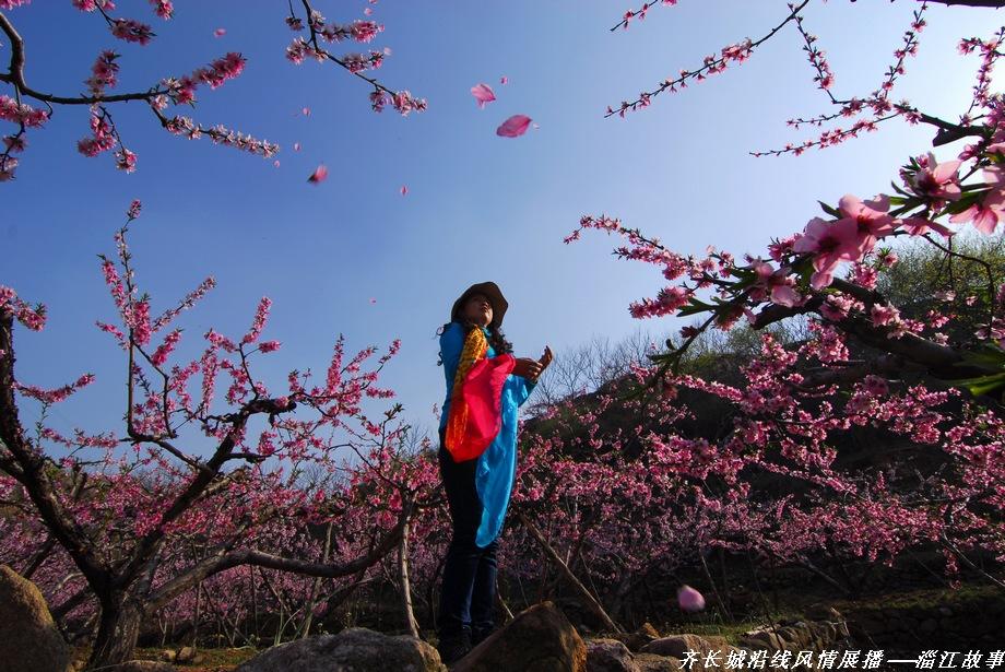山东山作品:落英缤纷桃花季