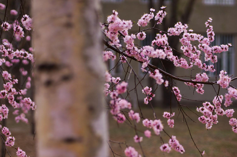 kevin060作品:大庆的春天