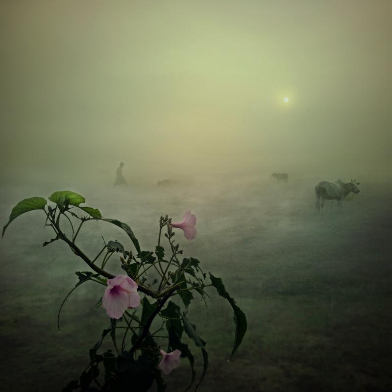 桥凹作品:雾漫山村