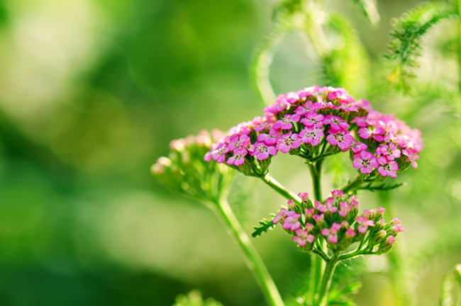 ¤神秘3¤作品:花
