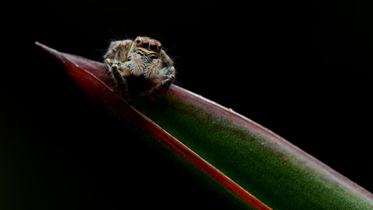 虫子光影作品:一叶扁舟