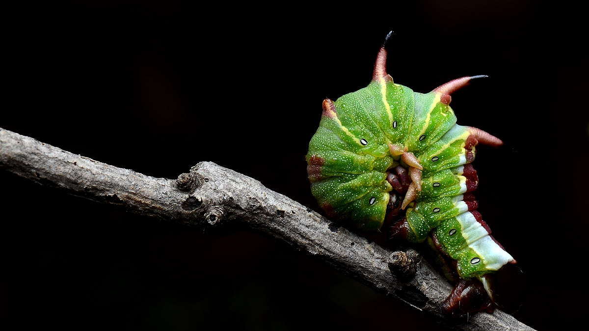 虫子光影作品:绵里藏针