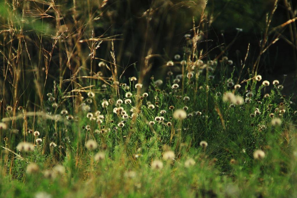 漫步春天作品:小草