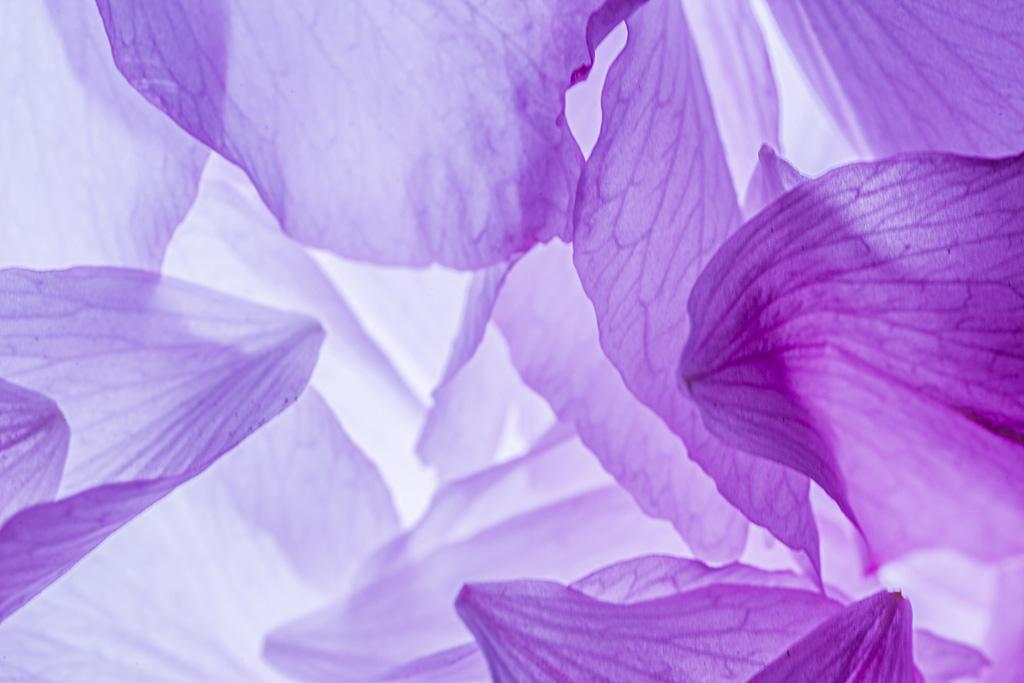夜雾深沉作品:花瓣雨