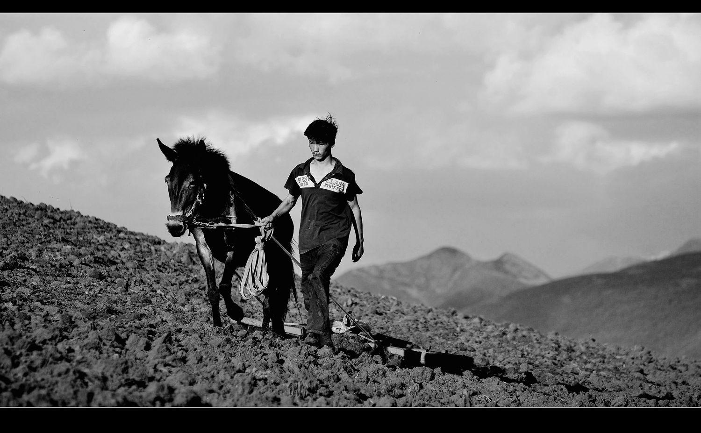 光影骑兵作品:耕作的人